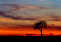 Sun Sets on a Lone Tree
